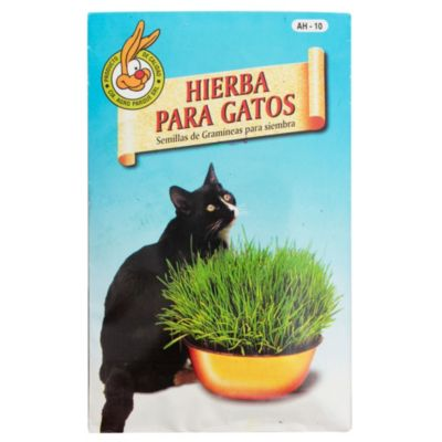 Hierbas para Gatos