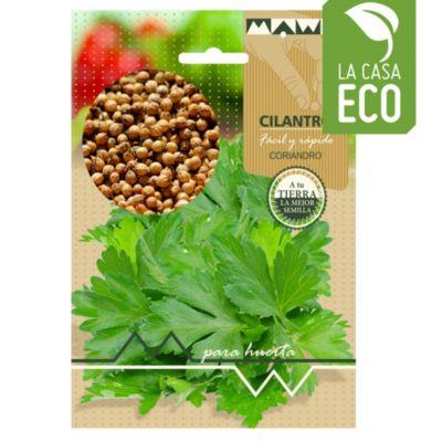 Semillas aromática cilantro