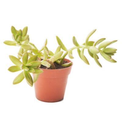 Cactus coleccien m8
