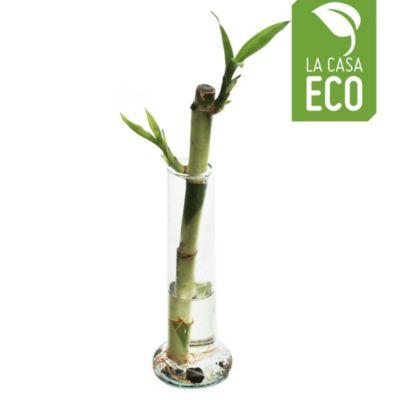 Bambú doble suerte recto 20 cm