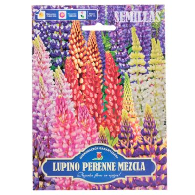 Semillas flores lupino