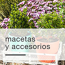 Macetas y accesorios