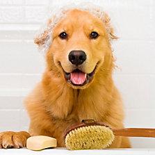 Higiene para perros