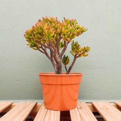 Maceta circular de cerámica marrón