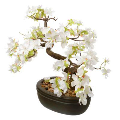 Bonsai Florido blanco