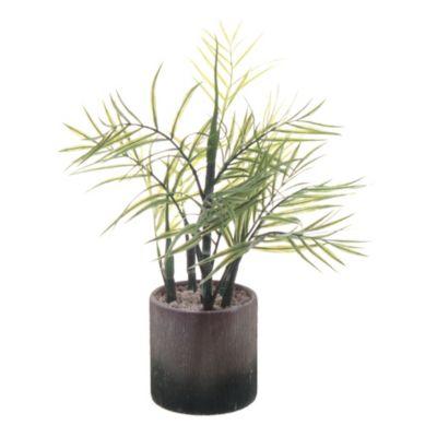 Bambu con maceta blanca