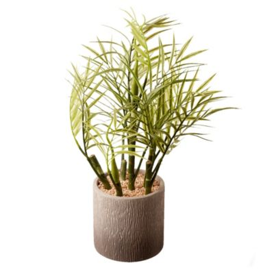 Bambu con maceta gris