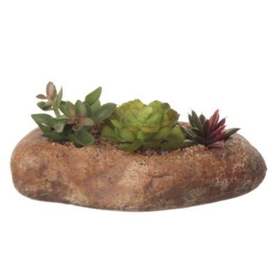 Cactus en pieda Diseño A