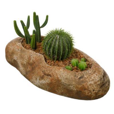 Cactus en pieda Diseño D