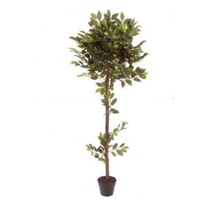 Ficus 160 cm con maceta