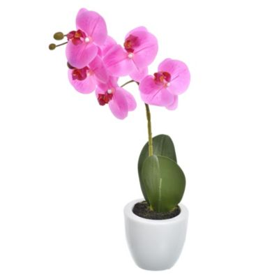 Phalaenopsis 38 cm con maceta