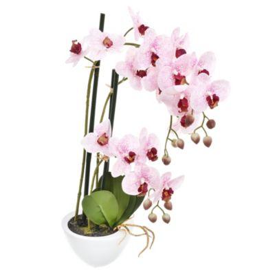 Phalaenopsis 54 cm con maceta